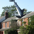 The Headington Shark