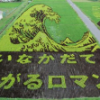 Rice paddy art in Inakadate